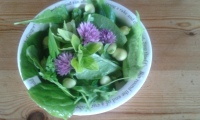 Fresh herbs in a small bowl including chives, marjoram, rocket and sorrel