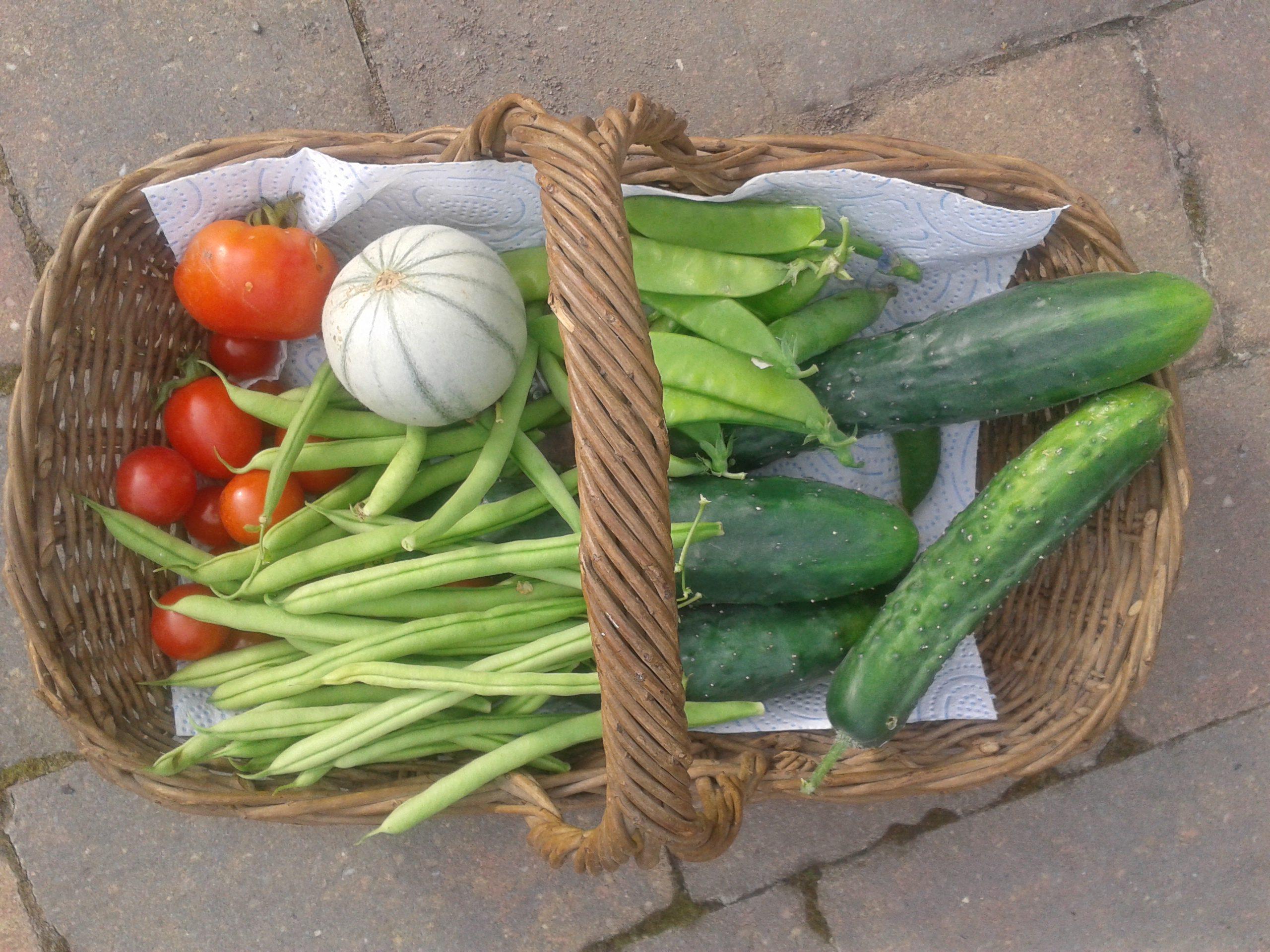 basket-of-veg