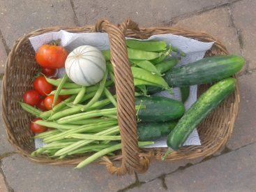 basket-of-veg
